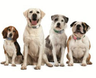 Lit et chargeur/ abreuvoirs pour votre chien