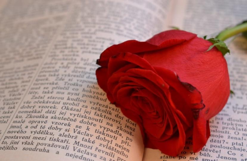 Diada de Sant Jordi – Avril 2020