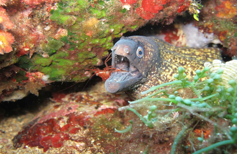Le Covid-19 a considérablement augmenté la quantité de poissons et crustacés dans la réserve des Illes Medes – Juin 2020
